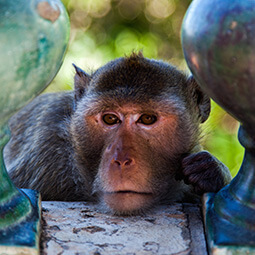monkey decor temple thailand zoom real UGC travel content photography